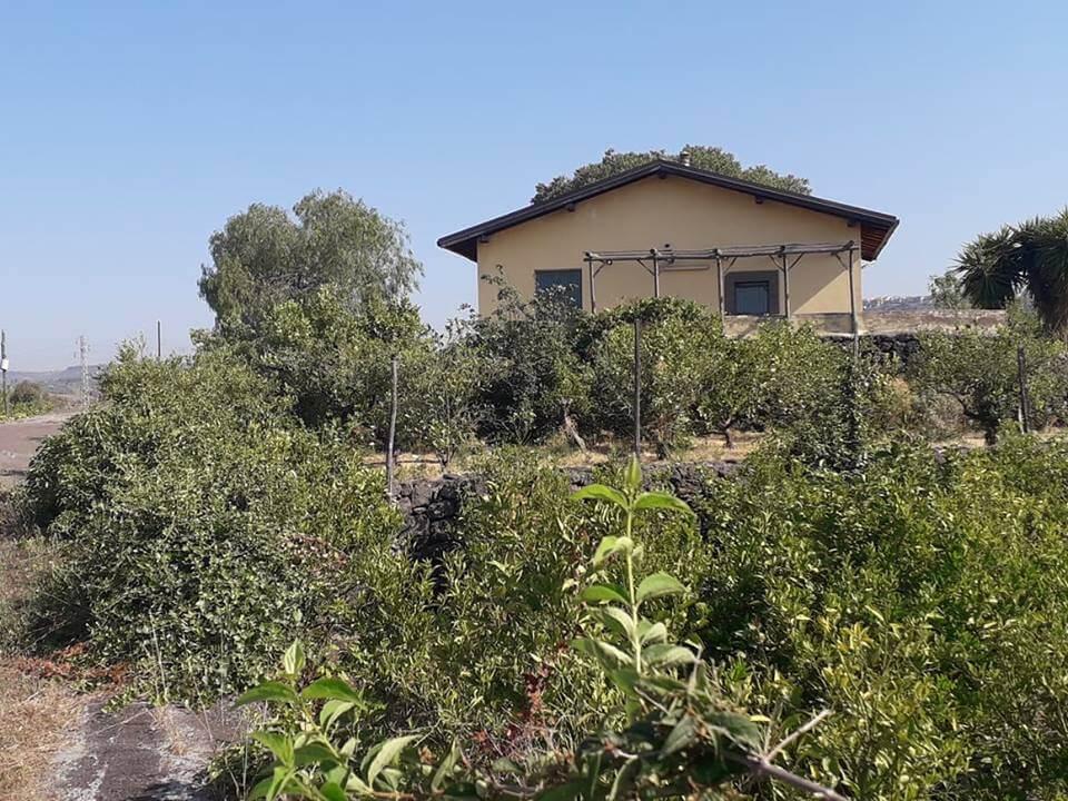 Cod. Pm 038 Paternò ampio agrumeto con piccola casetta